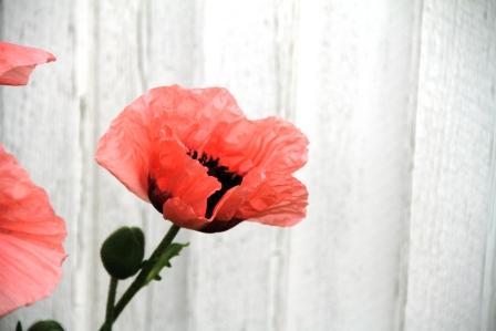 Pink flower - Pink flower in a garden