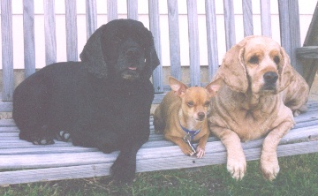 Bubbles, Peanut and Rainbow - All have gone over the Rainbow Bridge waiting for us.