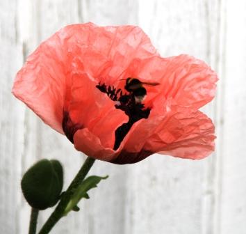 Garden flower - Pink garden flower