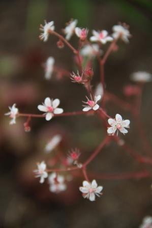 Garden flowers - Small garden flowers