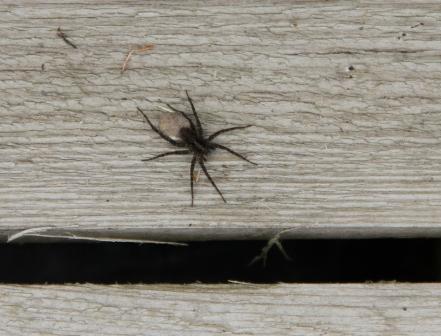 Spider on a wooden log - Spider sitting on a wooden log