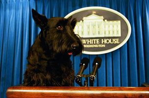 Barney - Barney was the 'First Dog' when George W.Bush was in office.