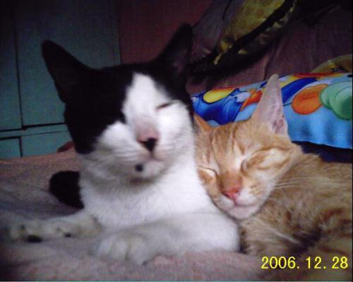 my two loving cats  - they died with my 3 other cats last september 2009 cause of typhoon ondoy