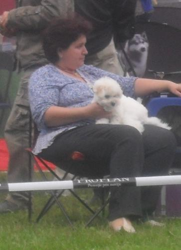 Bichon puppy - at CACIB Sibiu 2011