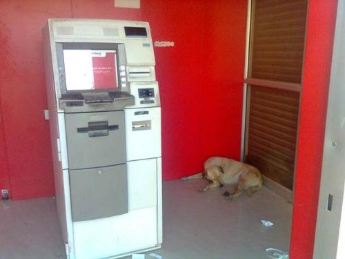 dog inside atm counter - a dog is sitting inside atm counter