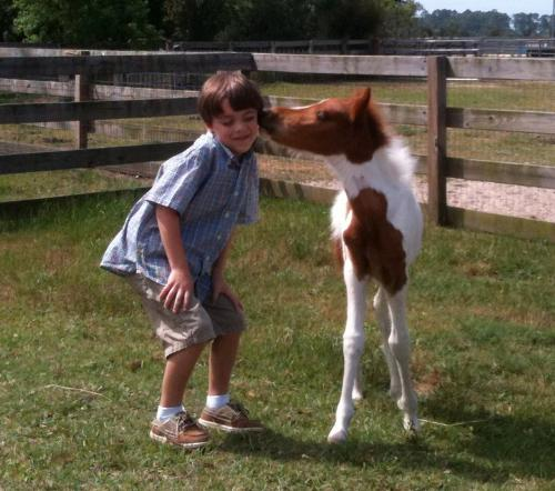 So cute! - This boy made a new freind with this foal! AWW!