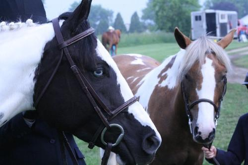 Jassmine and Chloe - Jassmaine is the black and white paint. Chloe is the pinto pony. They were waiting for a halter class here.