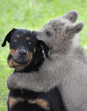 Unusual friends - A baby bear cub has made friends with a dog.