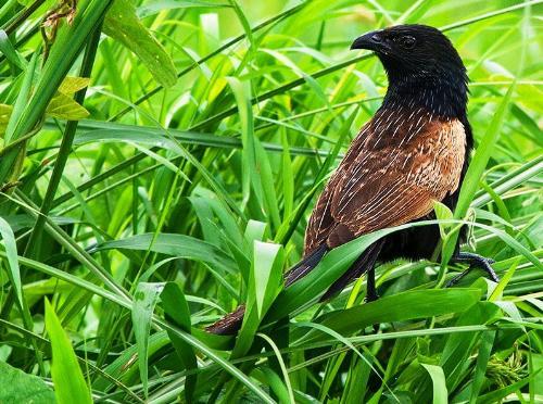 Bird - Nokia N82 Photography.