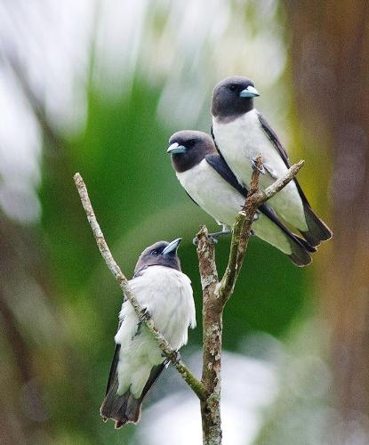 Birds - Blackberry photography. Birds.