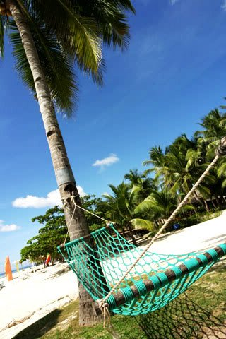 beach - Coconut tree beach, Nokia 7250