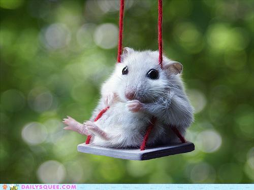 i'm waiting........ - i'm waiting for another hamster!