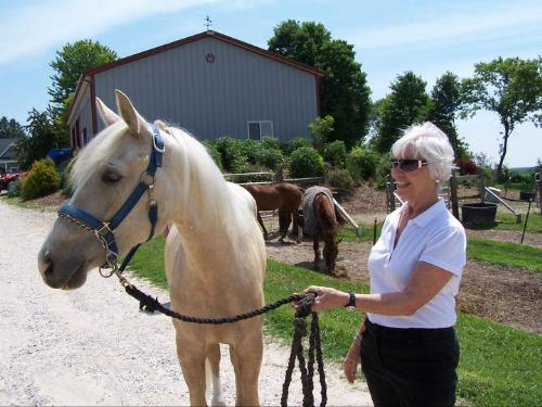 Plato - This is Plato. He is a 2 year old cross breed gelding. He is a pretty color of Palomino!