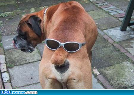 cool doggy - just look at this sylish doggy.
