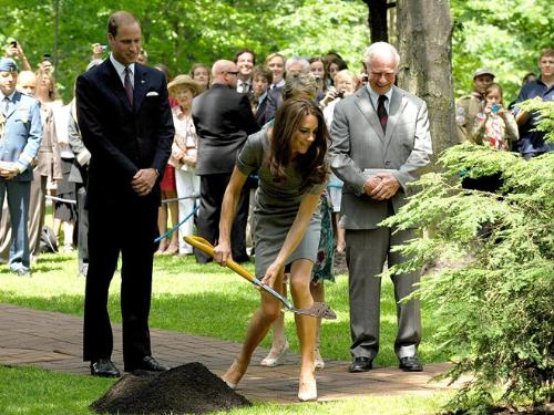 Kate and a shovel - Kate shoveling some dirt under the tree honoring her and Williams marriage.