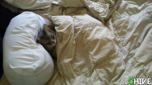 Cat in bed - Shhh! The cat is sleeping!