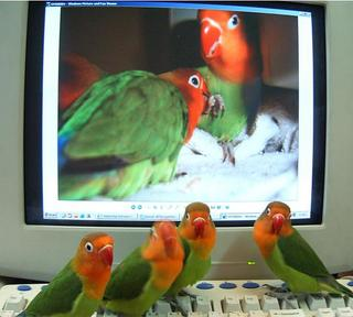 birds and internet - image size 12*24