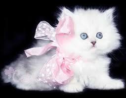 white cat - photo size 15 * 20