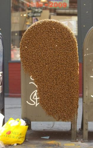 Bees! - Not long ago a swarm of bees decided to cover up this mail box in New York city! The street was blocked off until some bee handlers were called in to remove the bees. The bees were not harmed!