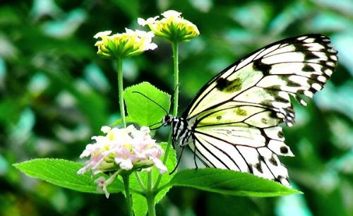 butterfly - A butterfly picture.
