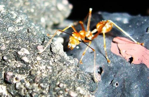 ant - Super close picture of an ant.
