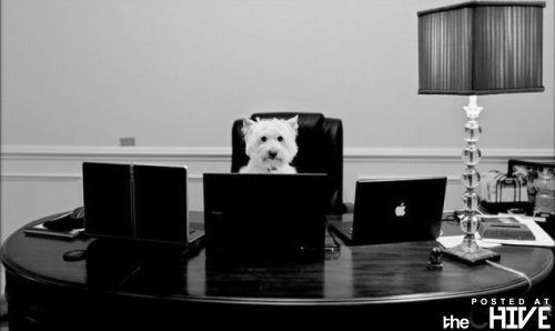 My work is never done! - This dog looks like it is swamped with work! Lol!