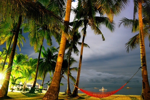 coconut trees - beach with coconut trees and dark blue skies.