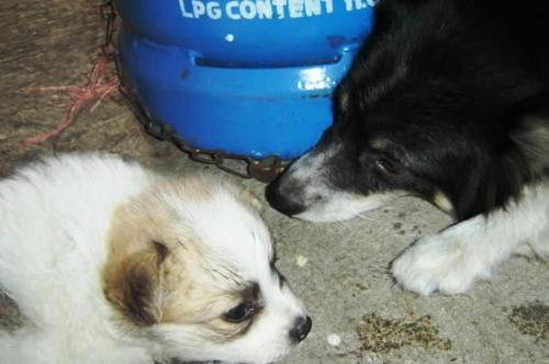 dog - dog and puppy sniffing liquified petroleum gas.