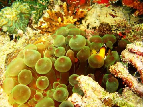 fish - underwater living organisms.