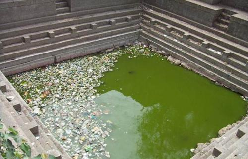 puja water from this - this pond water is green, full of germs