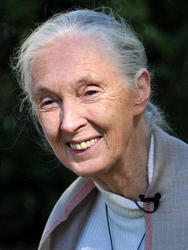 Jane Goodall - The searcher who did so much studying on chimps that now we know such more about them!
