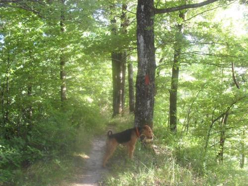 Are you coming? - Binne during a hike at Boul de Piatra