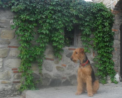 Posing for a photo - Binne during a hike at Boul de Piatra