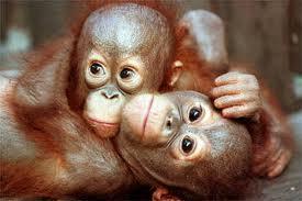 Cuddling among animals. - O! What a sight!