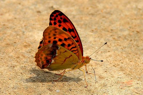 Beautifu Butterfly - I took this picture when I was travelling at Chengde, Hebei province, China.