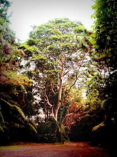 trees - a gorgeous tree.