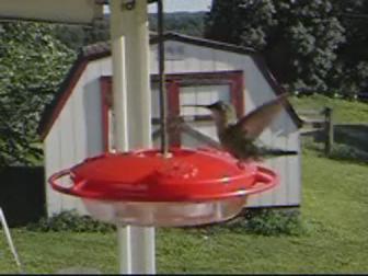 Humming Bird - A Humming Bird by a humming bird feeder.