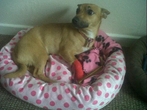 pixie - pixie and her wee red cast!