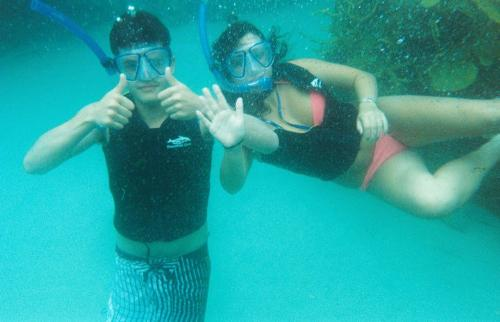 swimming with manta rays - at discovery covein florida