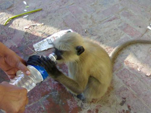 Thirsty summer - Water is the major cause of many desieases. So he is also having mineral water.