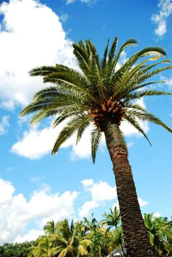 coconut tree - a coconut tree on the beach