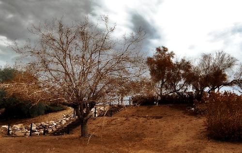 desert - desert trees in the heat of the sun.