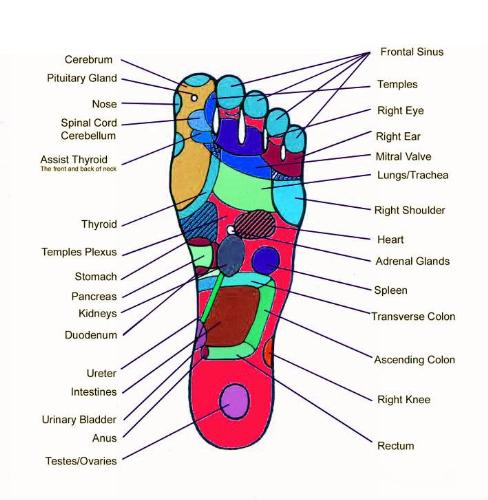 points on soles of feet - these points in soles of feet are very sensitive, press them to get relief