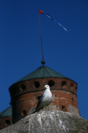 Gull in front of a castle - Gull in front of a Finish castle