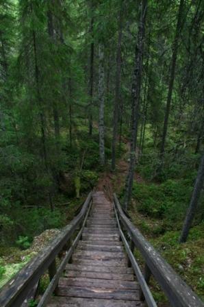 Boardwalk in Finland - Boardwalk in a forest in Finland