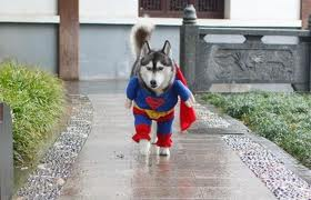 Super.....dog :D - Here is one of my funny collection picture.
