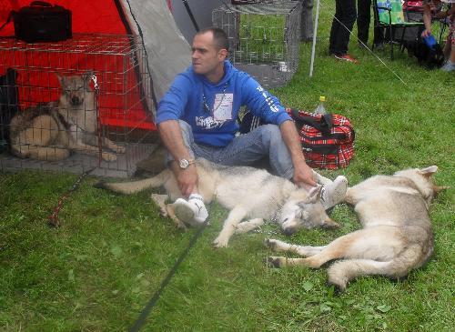 Czech Wolfs - at CACIB Sibiu 2011