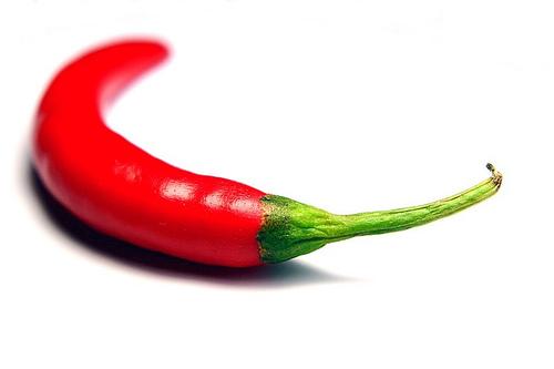 chilli pepper - little red chilli pepper