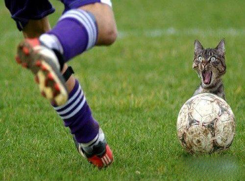 scared cat - there is a cat foot ball game,he is so scared?can you help him ? just for fun