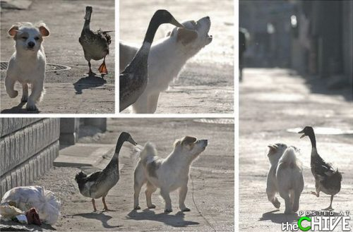 a Dog and A duck - How a duck and a dog became friends.